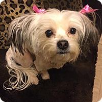 Adopt A Pet :: FROLIC - Los Angeles, CA