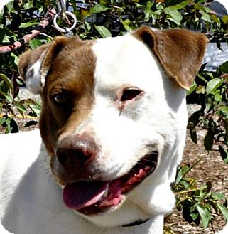 Terrier (Unknown Type, Medium) Mix Dog for adoption in Yreka, California - Collier