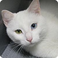 Adopt A Pet :: Meredith Gray - Tulsa, OK