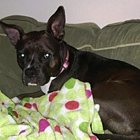 Adopt A Pet :: Shadow- Courtesy Listing - Fredericksburg, VA
