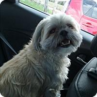 Adopt A Pet :: GiGi - Russellville, KY