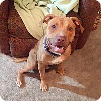 Adopt A Pet :: Trick - Frankfort, IL