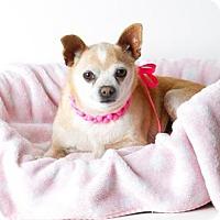 Adopt A Pet :: *LORNA - Sacramento, CA