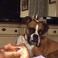 Adopt A Pet :: Ella Grace - Austin, TX