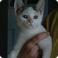 Adopt A Pet :: Eldridge - Troy, OH