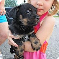 Adopt A Pet :: Gezane-ADOPTED!! - Glastonbury, CT