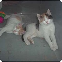 Adopt A Pet :: lookin4siblings? - Little Neck, NY
