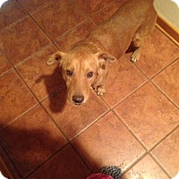 Adopt A Pet :: Bernie - Houston, TX