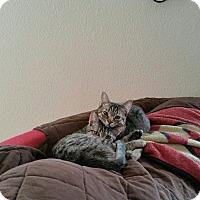 Adopt A Pet :: Scarlett/Scar - San Ramon, CA