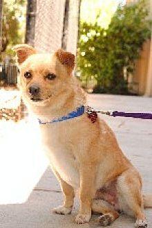Terrier (Unknown Type, Medium) Mix Dog for adoption in Pt. Richmond, California - OSITO