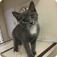 Adopt A Pet :: Dave - Richmond, VA
