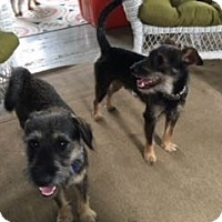 Adopt A Pet :: Quentin and Carter - Sharonville, OH