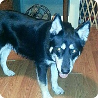 Adopt A Pet :: Mike meet me 12/2 - Manchester, CT