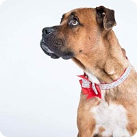 Adopt A Pet :: Faith - THREE RIVERS, MA