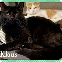 Adopt A Pet :: Klaus - Anderson, IN