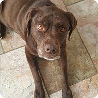 Adopt A Pet :: Hannah - Evergreen, CO