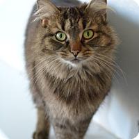 Adopt A Pet :: Lola - Greensburg, PA