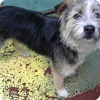 Adopt A Pet :: SKIPPER - Atlanta, GA
