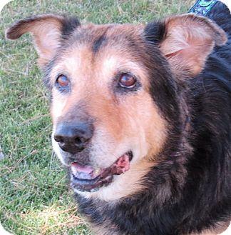 Shepherd (Unknown Type)/Labrador Retriever Mix Dog for adoption in Scottsdale, Arizona - Hope