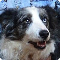 "Adopt A Pet :: Angel""Sponsors Needed"" - Minerva, OH"