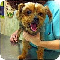 Adopt A Pet :: Becky - Homestead, FL