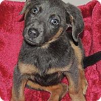 Adopt A Pet :: Maddie - La Habra Heights, CA