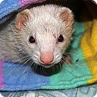 Adopt A Pet :: Skooner - Acworth, GA