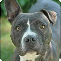 Adopt A Pet :: Ruby - Chicago, IL