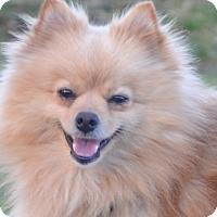 Adopt A Pet :: Paw Paw - Tumwater, WA
