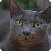 Adopt A Pet :: Sherrie - Brooklyn, NY