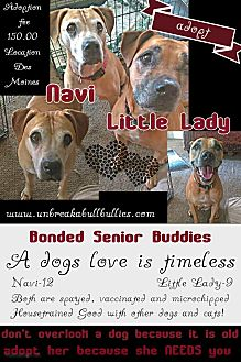 American Pit Bull Terrier Mix Dog for adoption in Des Moines, Iowa - Little Lady