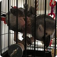 Adopt A Pet :: Zuie - Punta Gorda, FL