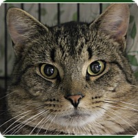 Adopt A Pet :: Cosmo - New Richmond,, WI
