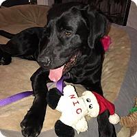 Adopt A Pet :: Coalton - Alpharetta, GA