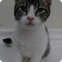 Adopt A Pet :: Hogan - Trevose, PA