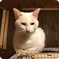 Adopt A Pet :: Sassy 3 - Bentonville, AR