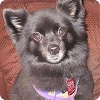 Adopt A Pet :: Kiki - Rootstown, OH
