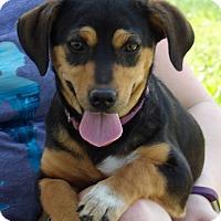Adopt A Pet :: Mona (9 lb) Video - Burlington, VT