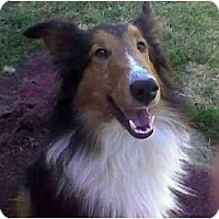 Adopt A Pet :: Bandit - Indiana, IN