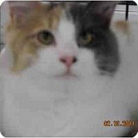 Adopt A Pet :: Mimosa - Riverside, RI