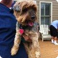 Adopt A Pet :: Frankie - Sweetest Man! - Quentin, PA