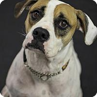 Adopt A Pet :: Crystal - Jupiter, FL