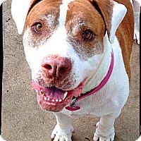 Adopt A Pet :: Sissi - Bastrop, TX