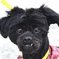 Adopt A Pet :: ALDO - New Haven, CT