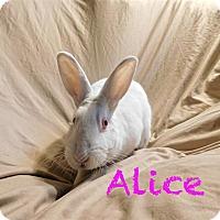 Adopt A Pet :: Alice - Elizabethtown, KY