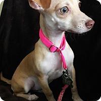 Adopt A Pet :: Barbie 2 - Las Vegas, NV
