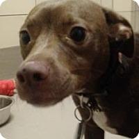 Adopt A Pet :: Biscuit - Alpharetta, GA