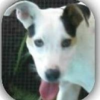Adopt A Pet :: Tammi!  Gentle & Kind - St Petersburg, FL
