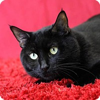 Adopt A Pet :: Ralphie - Blackwood, NJ