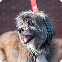 Adopt A Pet :: Benedict  3 Years - C/S & Denver Metro, CO